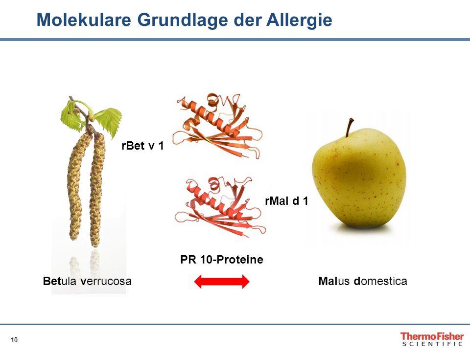 10 Molekulare Grundlage der Allergie rBet v 1 Betula verrucosaMalus domestica rMal d 1 PR 10-Proteine