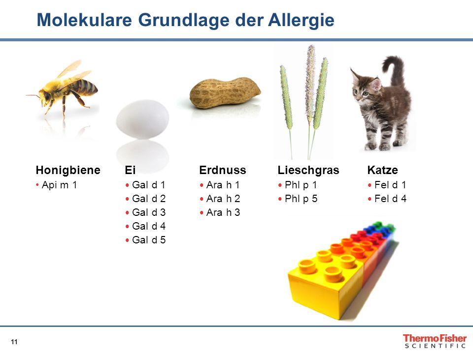 11 Molekulare Grundlage der Allergie Honigbiene Api m 1 Ei Gal d 1 Gal d 2 Gal d 3 Gal d 4 Gal d 5 Erdnuss Ara h 1 Ara h 2 Ara h 3 Lieschgras Phl p 1
