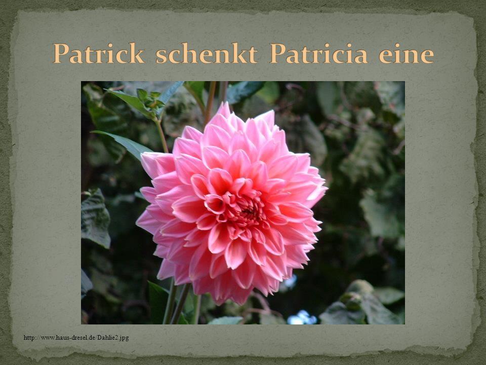 http://www.haus-dresel.de/Dahlie2.jpg