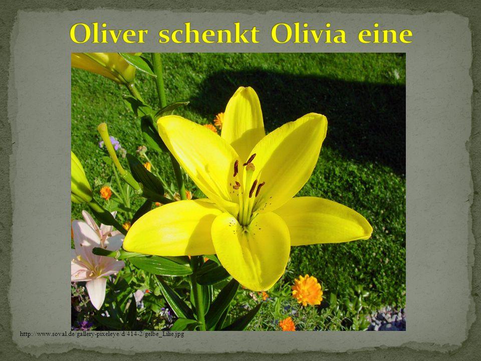 http://www.soval.de/gallery-pixeleye/d/414-2/gelbe_Lilie.jpg