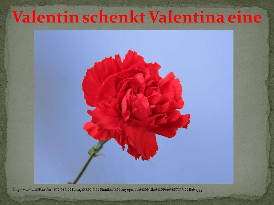 Valentin schenkt Valentina eine http://www.linz09.at/fm/4972/18%20Portugal%20-%20Dianthus%20caryophyllus%20Nelke%20Foto%20W.%20Bejvl.jpg