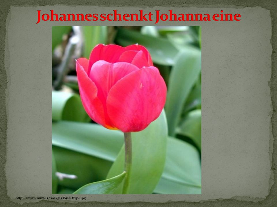 http://www.lemmie.at/images/h400/tulpe.jpg