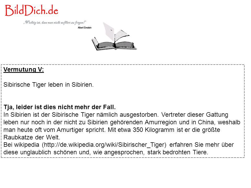 Vermutung V: Sibirische Tiger leben in Sibirien. Tja, leider ist dies nicht mehr der Fall. In Sibirien ist der Sibirische Tiger nämlich ausgestorben.