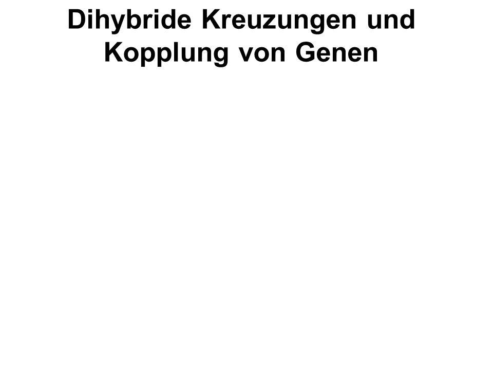Dihybride Kreuzungen und Kopplung von Genen