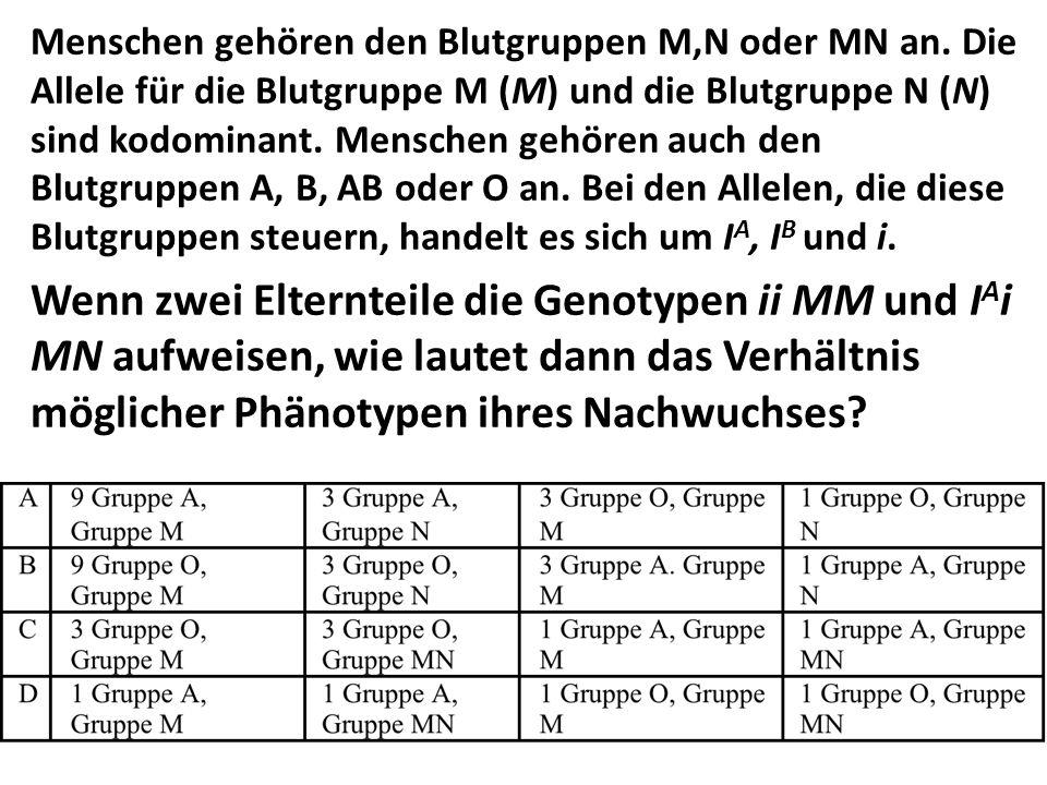 Menschen gehören den Blutgruppen M,N oder MN an. Die Allele für die Blutgruppe M (M) und die Blutgruppe N (N) sind kodominant. Menschen gehören auch d