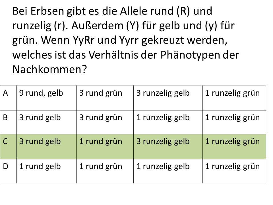 Bei Erbsen gibt es die Allele rund (R) und runzelig (r). Außerdem (Y) für gelb und (y) für grün. Wenn YyRr und Yyrr gekreuzt werden, welches ist das V