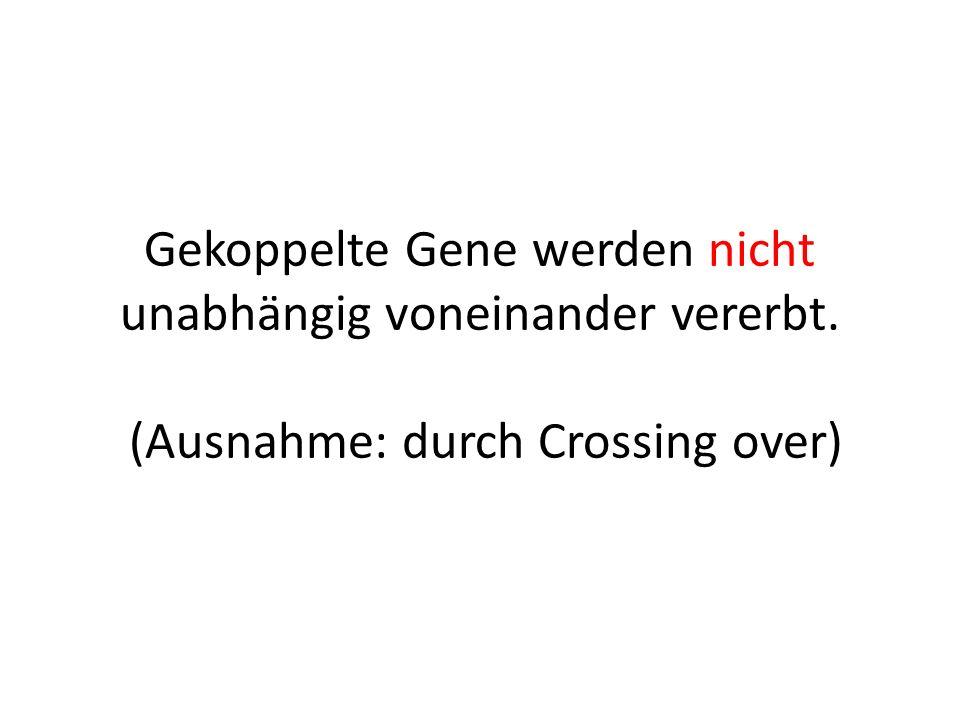 Gekoppelte Gene werden nicht unabhängig voneinander vererbt. (Ausnahme: durch Crossing over)