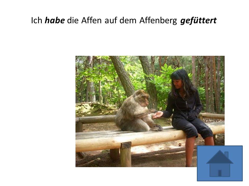 Ich habe die Affen auf dem Affenberg gefüttert