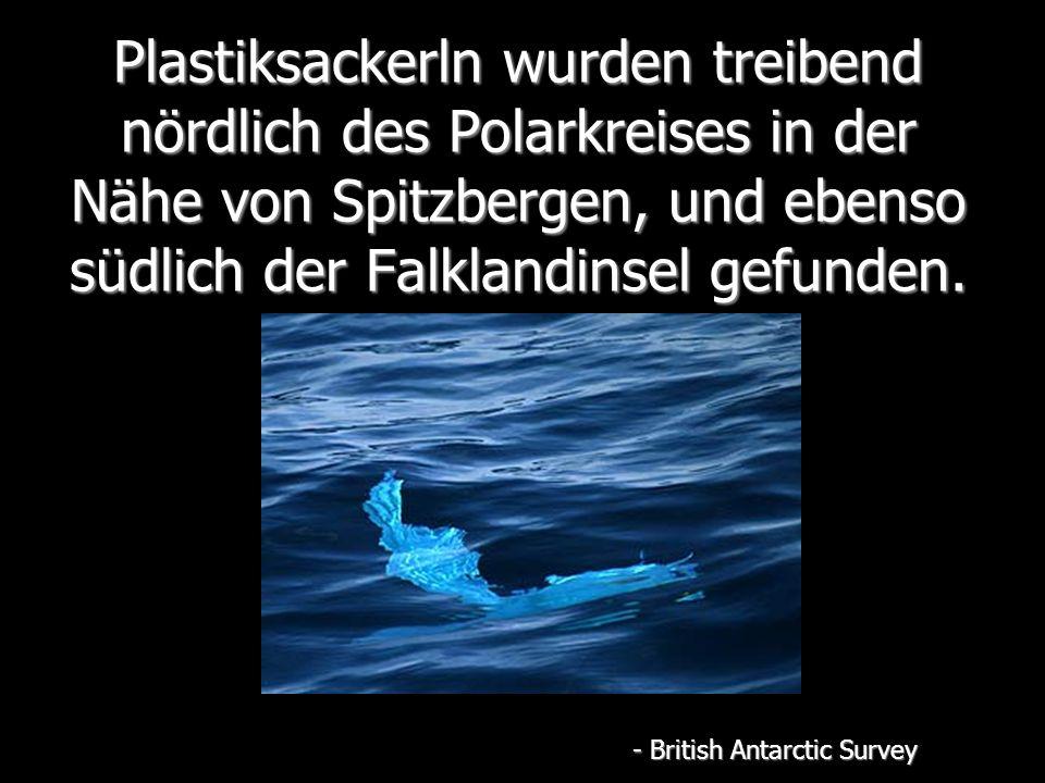 Plastiksackerln wurden treibend nördlich des Polarkreises in der Nähe von Spitzbergen, und ebenso südlich der Falklandinsel gefunden.