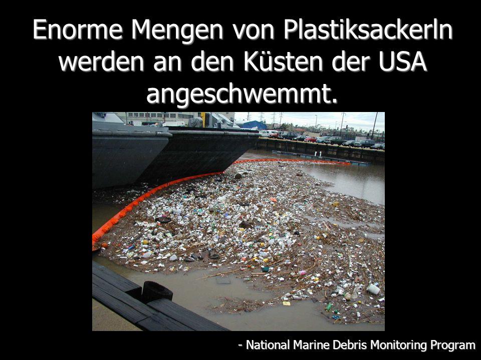 Enorme Mengen von Plastiksackerln werden an den Küsten der USA angeschwemmt.