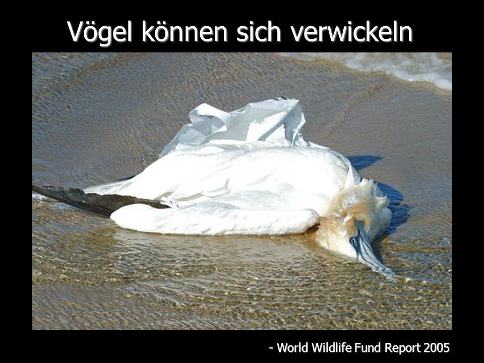 Vögel können sich verwickeln - World Wildlife Fund Report 2005