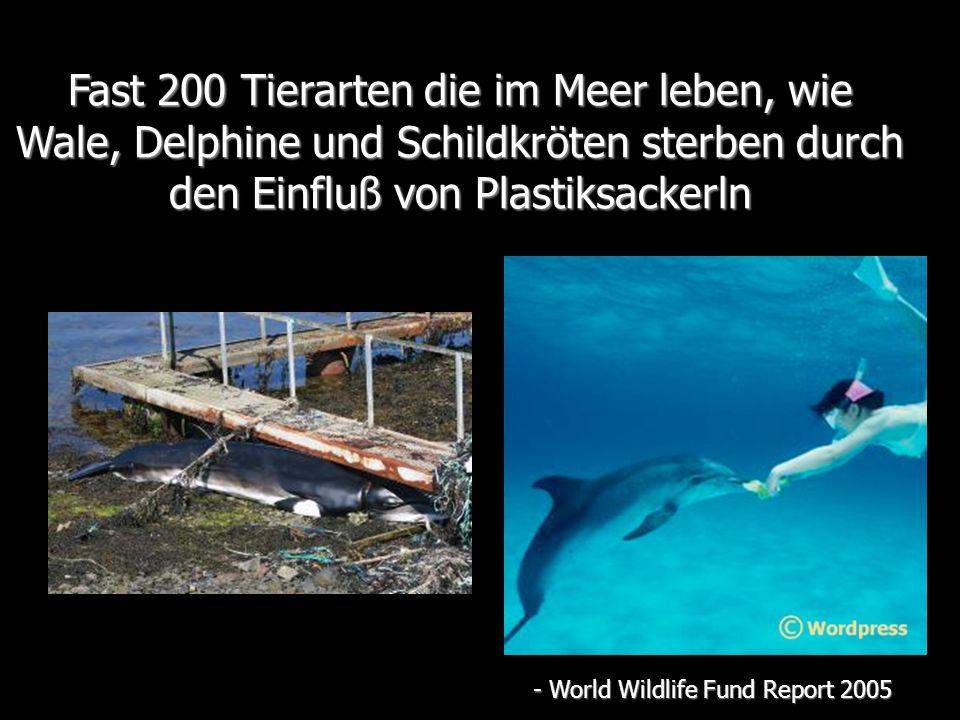 Fast 200 Tierarten die im Meer leben, wie Wale, Delphine und Schildkröten sterben durch den Einfluß von Plastiksackerln - World Wildlife Fund Report 2005