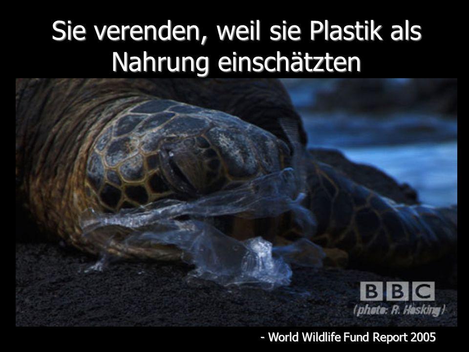 Sie verenden, weil sie Plastik als Nahrung einschätzten - World Wildlife Fund Report 2005