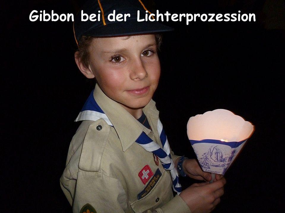 Gibbon bei der Lichterprozession