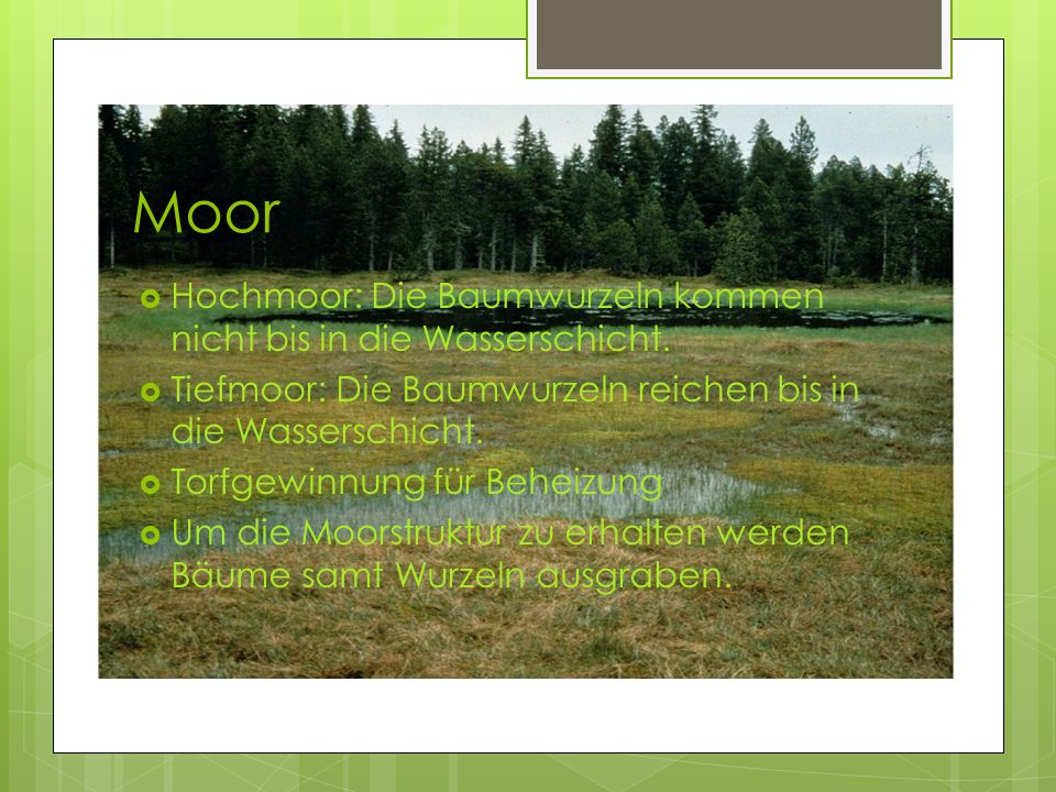 Moor Hochmoor: Die Baumwurzeln kommen nicht bis in die Wasserschicht. Tiefmoor: Die Baumwurzeln reichen bis in die Wasserschicht. Torfgewinnung für Be