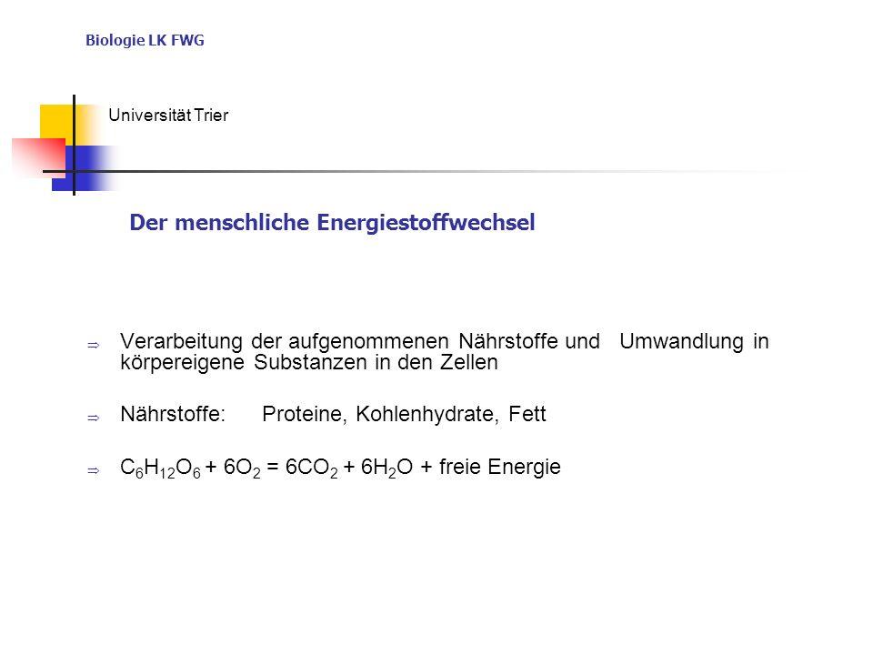 Biologie LK FWG Universität Trier Verarbeitung der aufgenommenen Nährstoffe und Umwandlung in körpereigene Substanzen in den Zellen Nährstoffe: Proteine, Kohlenhydrate, Fett C 6 H 12 O 6 + 6O 2 = 6CO 2 + 6H 2 O + freie Energie Der menschliche Energiestoffwechsel