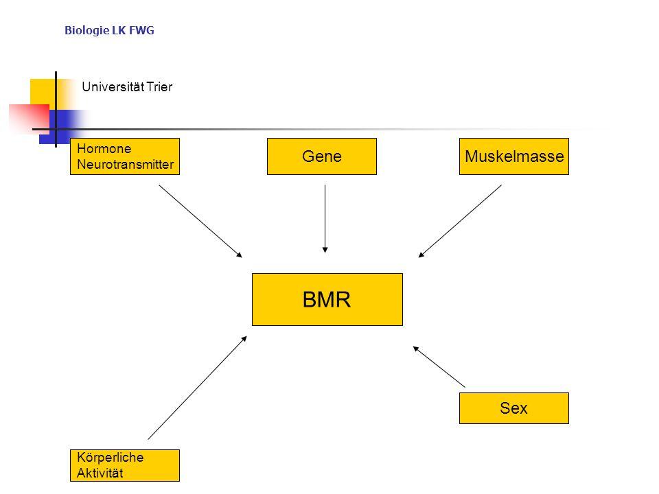 Biologie LK FWG Universität Trier BMR Hormone Neurotransmitter GeneMuskelmasse Körperliche Aktivität Sex