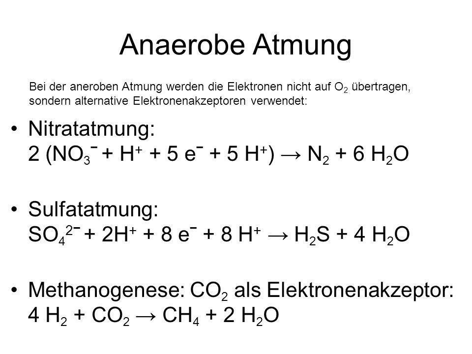 Anaerobe Atmung Nitratatmung: 2 (NO 3 ˉ + H + + 5 eˉ + 5 H + ) N 2 + 6 H 2 O Sulfatatmung: SO 4 2 ˉ + 2H + + 8 eˉ + 8 H + H 2 S + 4 H 2 O Methanogenese: CO 2 als Elektronenakzeptor: 4 H 2 + CO 2 CH 4 + 2 H 2 O Bei der aneroben Atmung werden die Elektronen nicht auf O 2 übertragen, sondern alternative Elektronenakzeptoren verwendet: