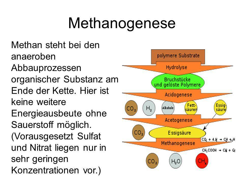 Methanogenese Methan steht bei den anaeroben Abbauprozessen organischer Substanz am Ende der Kette.