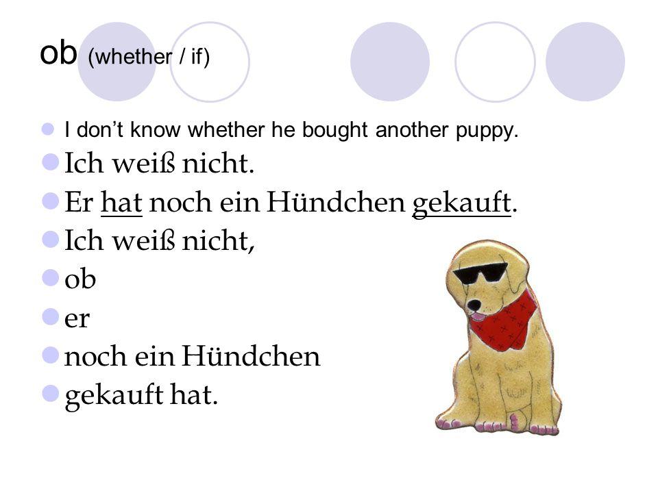 ob (whether / if) I dont know whether he bought another puppy. Ich weiß nicht. Er hat noch ein Hündchen gekauft. Ich weiß nicht, ob er noch ein Hündch