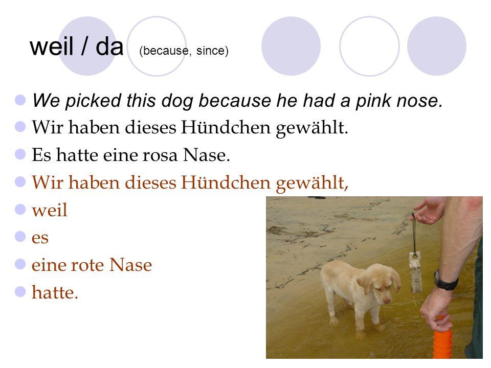 weil / da (because, since) We picked this dog because he had a pink nose. Wir haben dieses Hündchen gewählt. Es hatte eine rosa Nase. Wir haben dieses