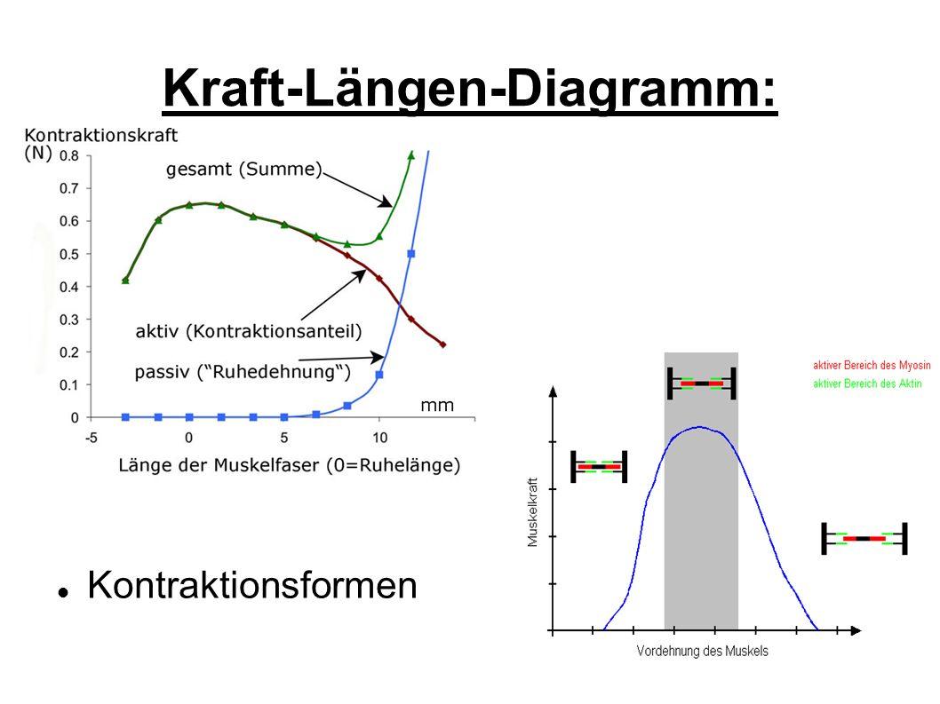 Kraft-Längen-Diagramm: Kontraktionsformen
