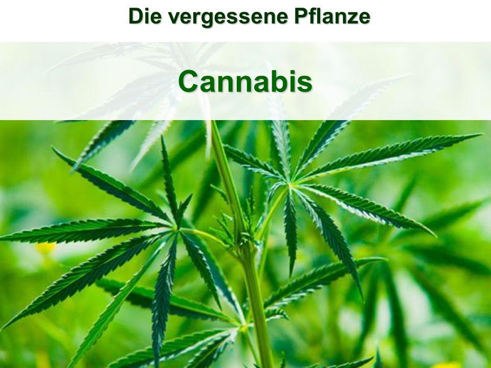 Cannabis Die vergessene Pflanze