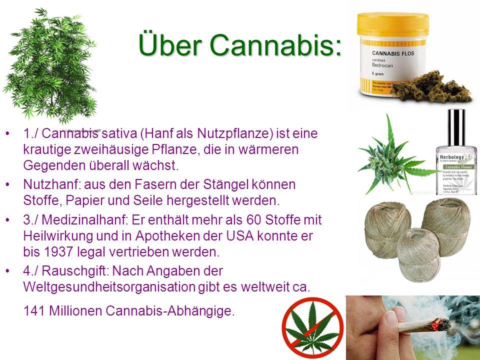 Über Cannabis: 1./ Cannabis sativa (Hanf als Nutzpflanze) ist eine krautige zweihäusige Pflanze, die in wärmeren Gegenden überall wächst.
