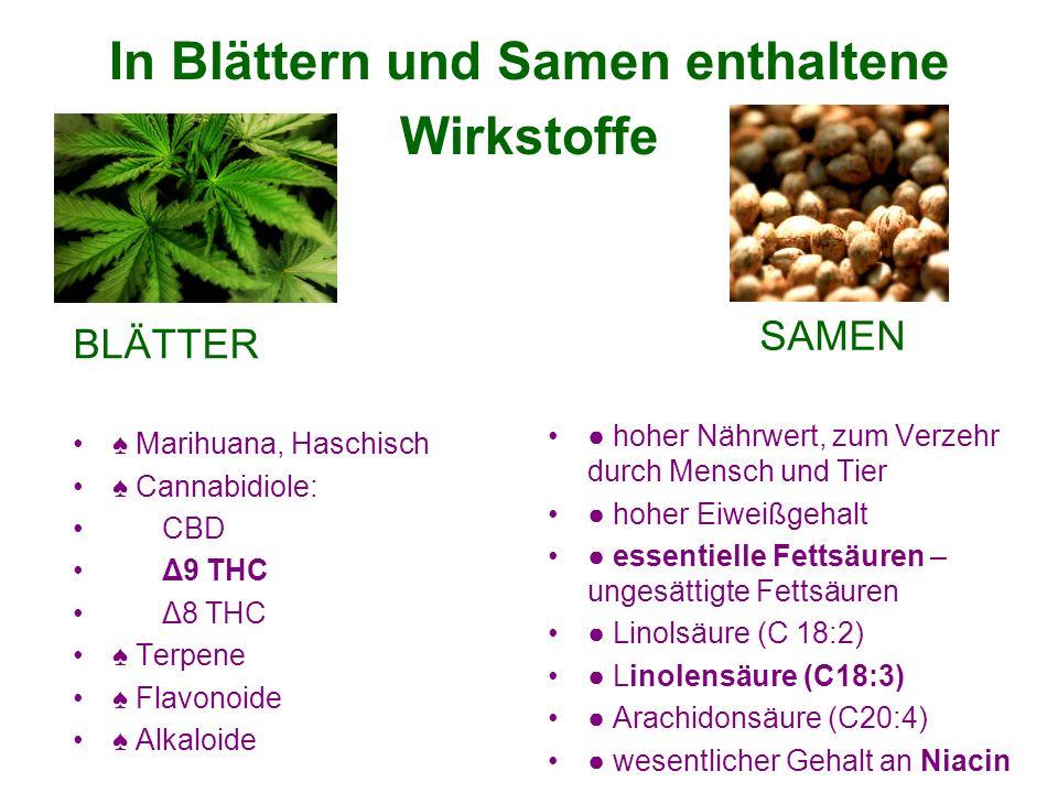 In Blättern und Samen enthaltene Wirkstoffe BLÄTTER Marihuana, Haschisch Cannabidiole: CBD Δ9 THC Δ8 THC Terpene Flavonoide Alkaloide SAMEN hoher Nährwert, zum Verzehr durch Mensch und Tier hoher Eiweißgehalt essentielle Fettsäuren – ungesättigte Fettsäuren Linolsäure (C 18:2) Linolensäure (C18:3) Arachidonsäure (C20:4) wesentlicher Gehalt an Niacin