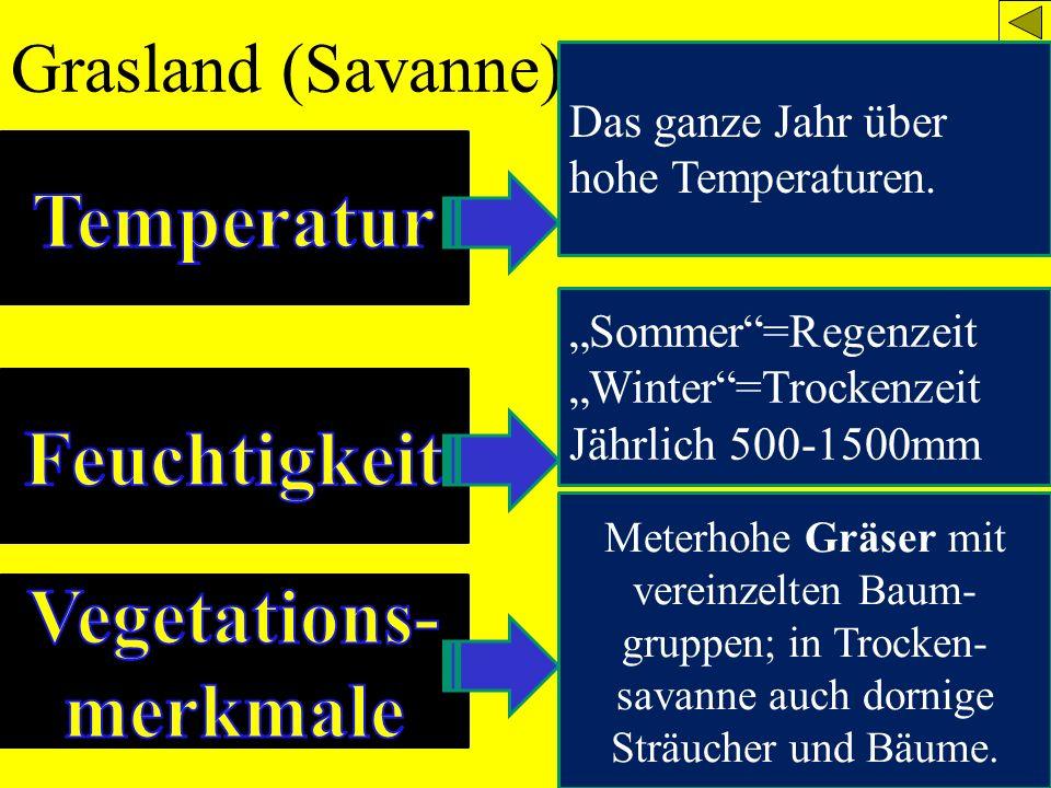 Grasland (Savanne) Das ganze Jahr über hohe Temperaturen. Sommer=Regenzeit Winter=Trockenzeit Jährlich 500-1500mm Meterhohe Gräser mit vereinzelten Ba