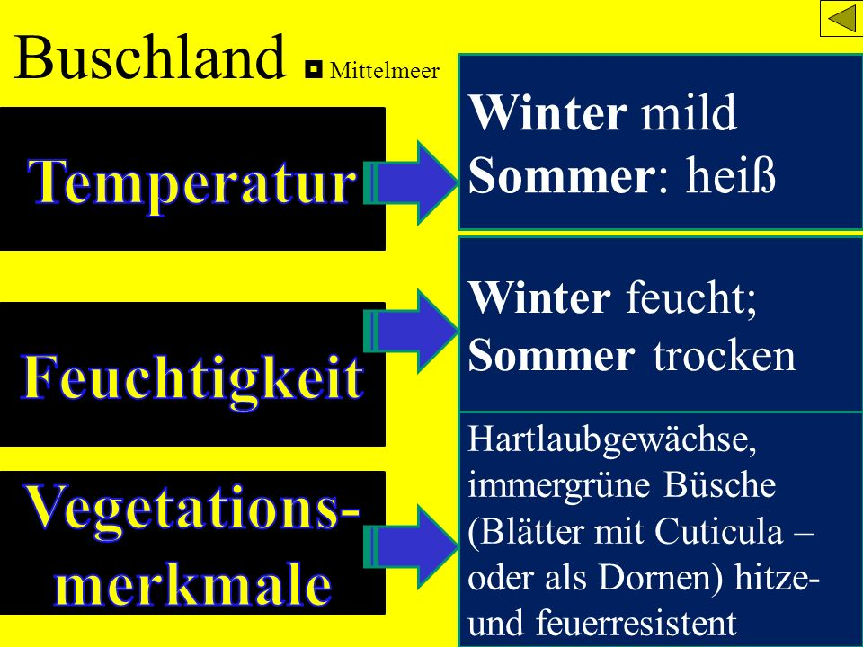 Buschland Mittelmeer Winter mild Sommer: heiß Winter feucht; Sommer trocken Hartlaubgewächse, immergrüne Büsche (Blätter mit Cuticula – oder als Dorne