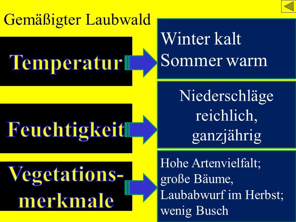 Gemäßigter Laubwald Winter kalt Sommer warm Niederschläge reichlich, ganzjährig Hohe Artenvielfalt; große Bäume, Laubabwurf im Herbst; wenig Busch