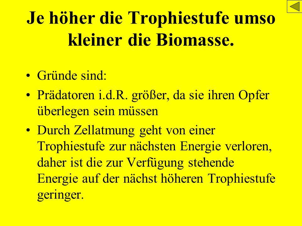 Je höher die Trophiestufe umso kleiner die Biomasse. Gründe sind: Prädatoren i.d.R. größer, da sie ihren Opfer überlegen sein müssen Durch Zellatmung