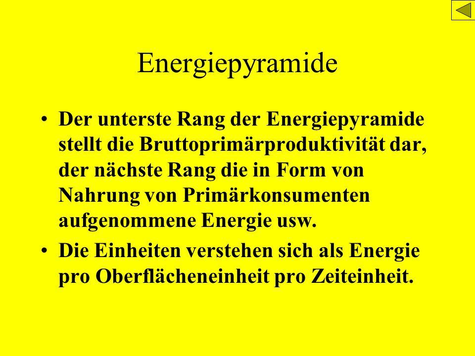 Energiepyramide Der unterste Rang der Energiepyramide stellt die Bruttoprimärproduktivität dar, der nächste Rang die in Form von Nahrung von Primärkon