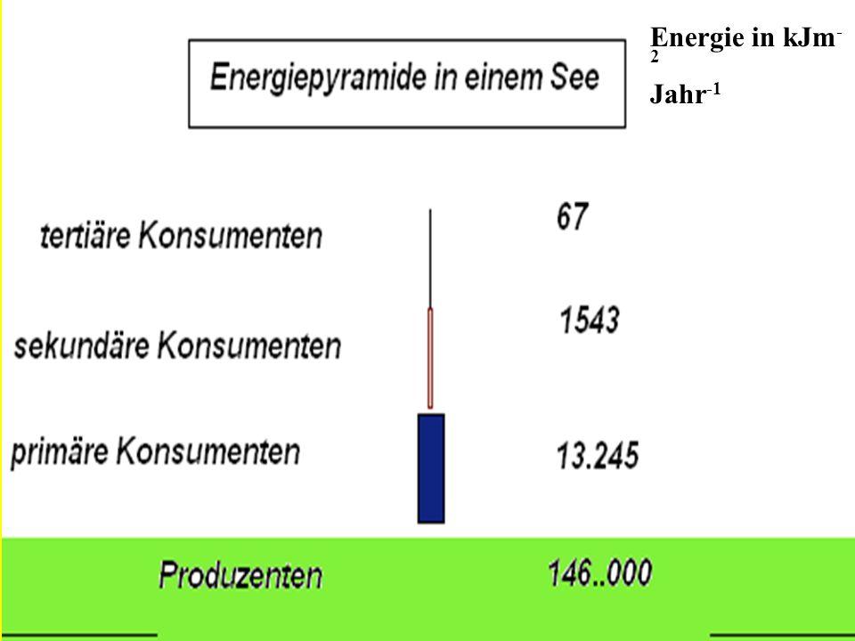 Energie in kJm - 2 Jahr -1