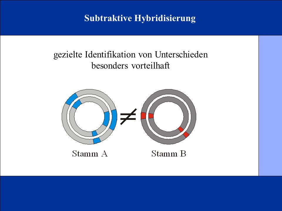 Subtraktive Hybridisierung gezielte Identifikation von Unterschieden besonders vorteilhaft