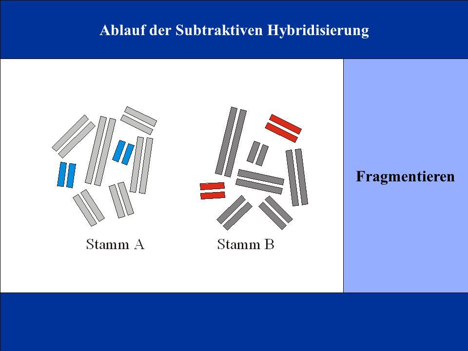 Ablauf der Subtraktiven Hybridisierung Fragmentieren
