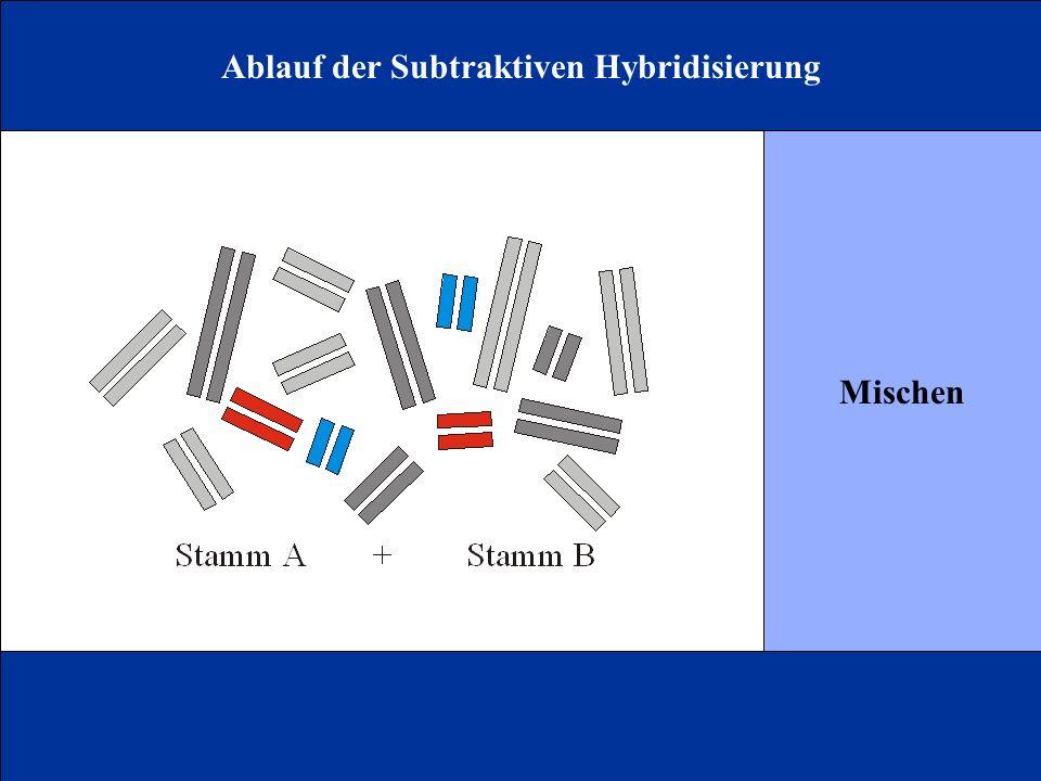 Ablauf der Subtraktiven Hybridisierung Mischen