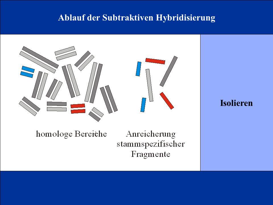 Ablauf der Subtraktiven Hybridisierung Isolieren