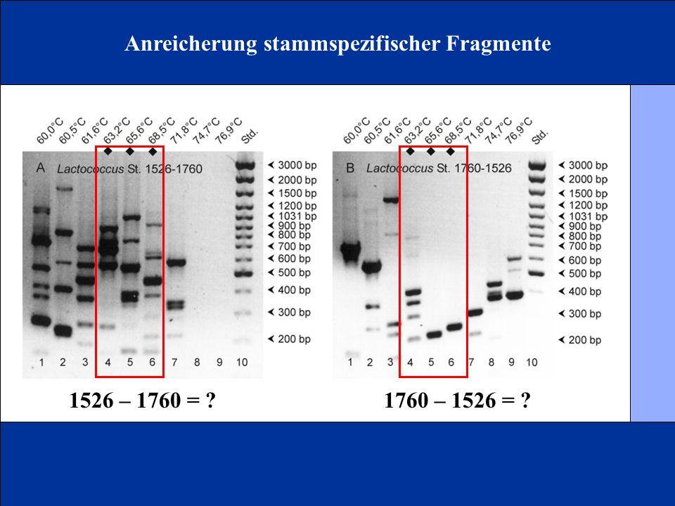 Anreicherung stammspezifischer Fragmente 1526 – 1760 = ?1760 – 1526 = ?