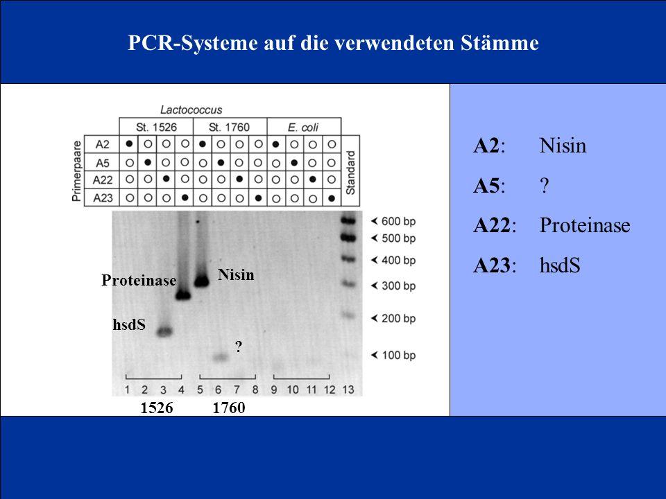 PCR-Systeme auf die verwendeten Stämme A2:Nisin A5:? A22:Proteinase A23:hsdS Nisin ? Proteinase hsdS 15261760