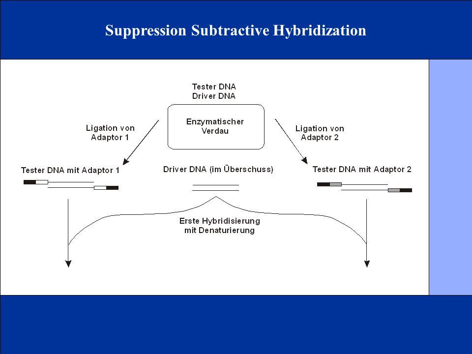 Suppression Subtractive Hybridization