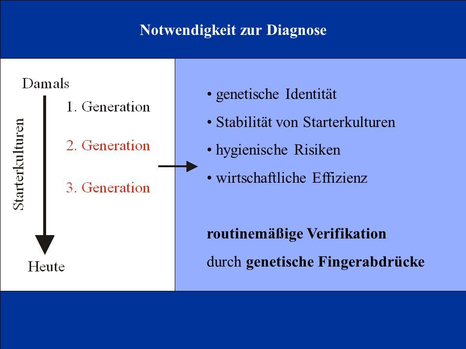 Notwendigkeit zur Diagnose genetische Identität Stabilität von Starterkulturen hygienische Risiken wirtschaftliche Effizienz routinemäßige Verifikation durch genetische Fingerabdrücke