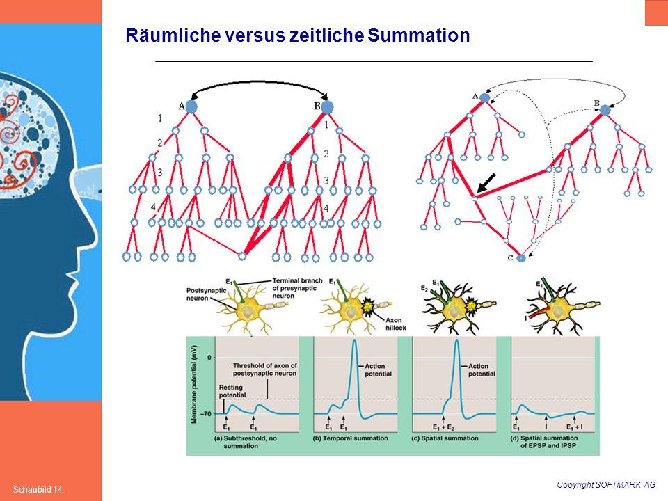 Copyright SOFTMARK AG Schaubild 14 Räumliche versus zeitliche Summation