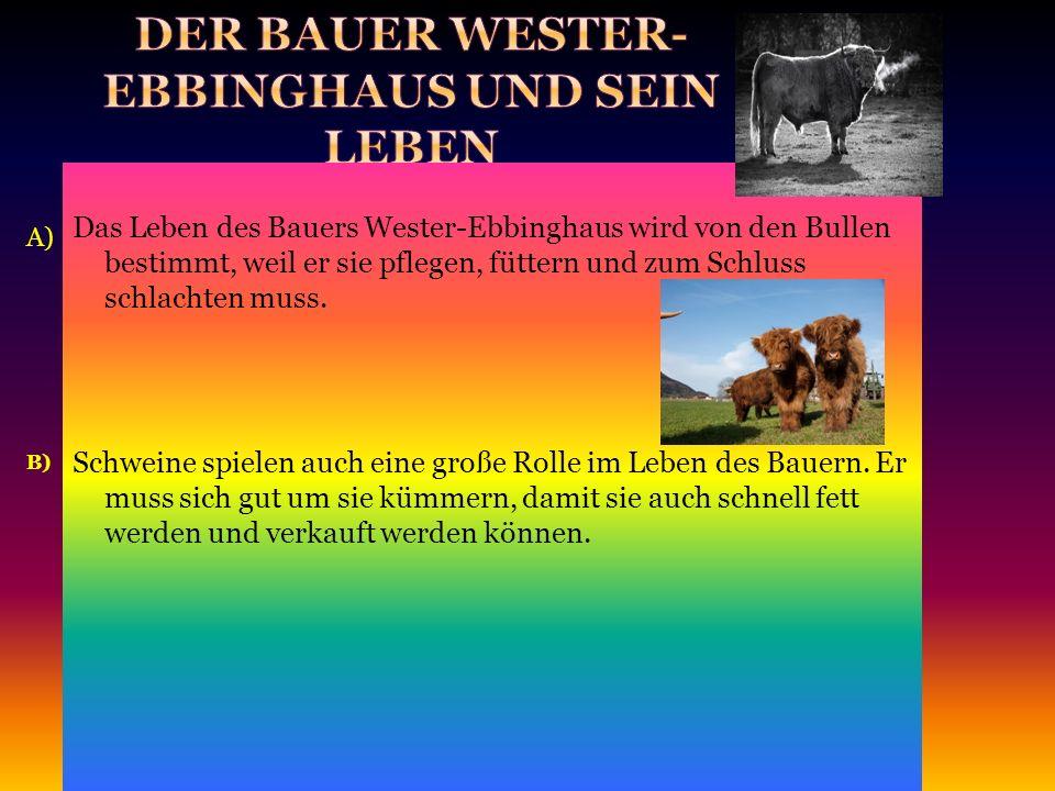 A) B) Das Leben des Bauers Wester-Ebbinghaus wird von den Bullen bestimmt, weil er sie pflegen, füttern und zum Schluss schlachten muss.