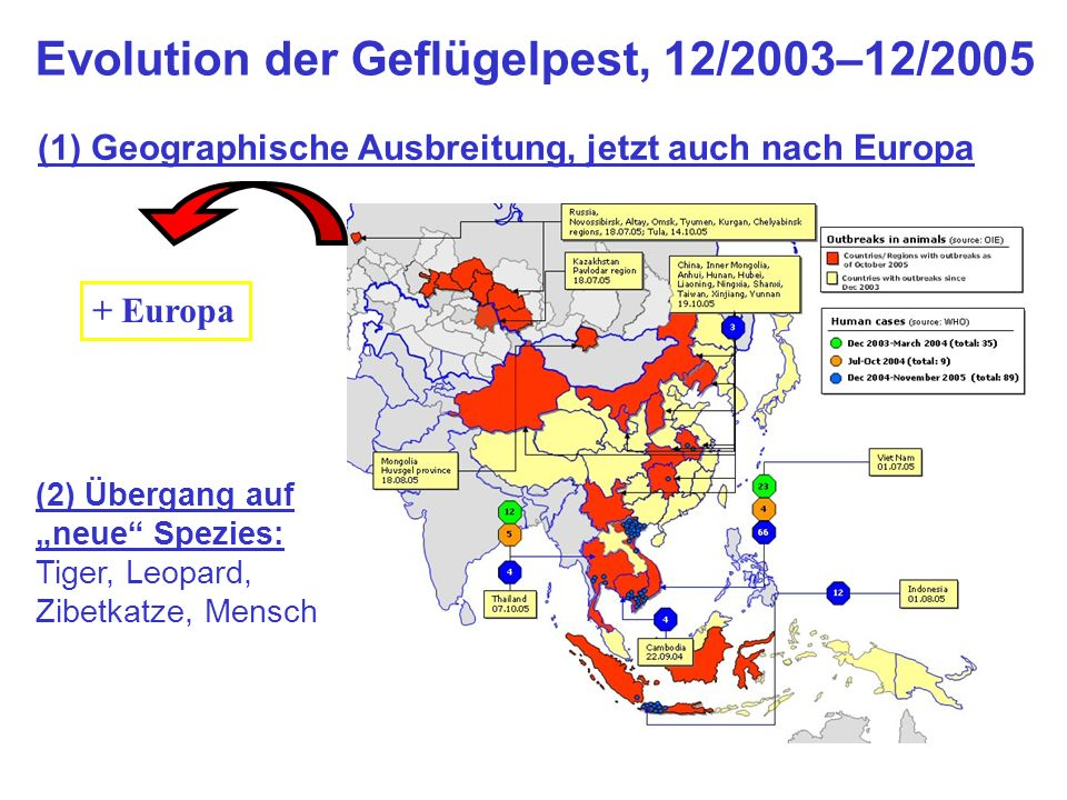 Evolution der Geflügelpest, 12/2003–12/2005 + Europa (2) Übergang auf neue Spezies: Tiger, Leopard, Zibetkatze, Mensch (1) Geographische Ausbreitung,