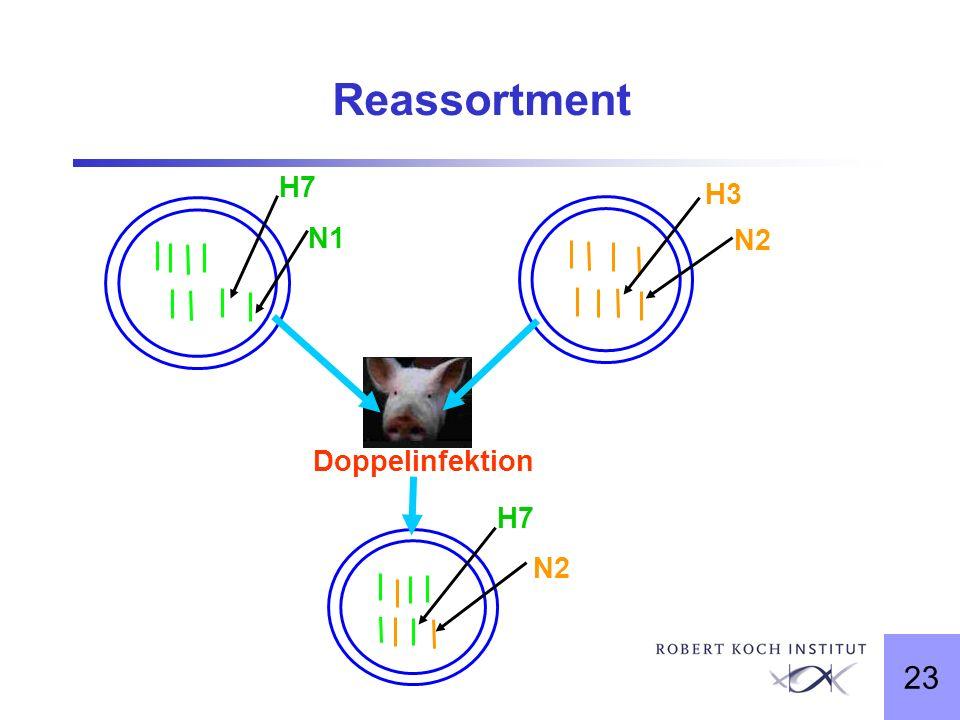 23 Reassortment H7 H3 N2 N1 Doppelinfektion H7 N2