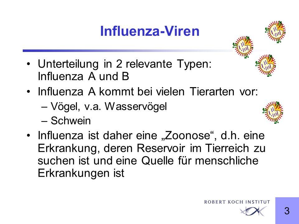 3 Influenza-Viren Unterteilung in 2 relevante Typen: Influenza A und B Influenza A kommt bei vielen Tierarten vor: –Vögel, v.a. Wasservögel –Schwein I