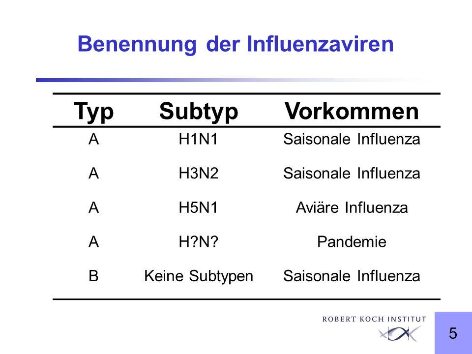 5 Benennung der Influenzaviren TypSubtypVorkommen AH1N1Saisonale Influenza AH3N2Saisonale Influenza AH5N1Aviäre Influenza AH?N?Pandemie BKeine Subtype