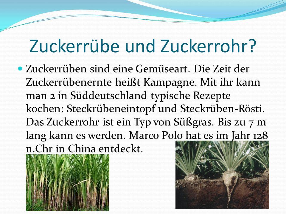 Zuckerrübe und Zuckerrohr? Zuckerrüben sind eine Gemüseart. Die Zeit der Zuckerrübenernte heißt Kampagne. Mit ihr kann man 2 in Süddeutschland typisch